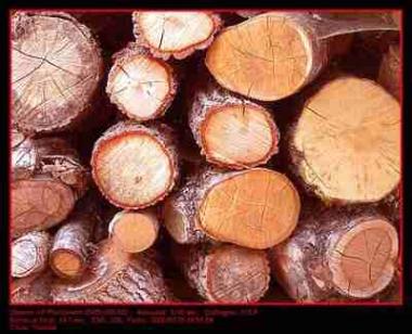La madera, recurso de biomasa