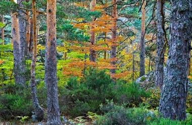 Bosque en la comarca de Pinares