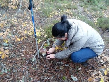 Micoturista buscando hongos