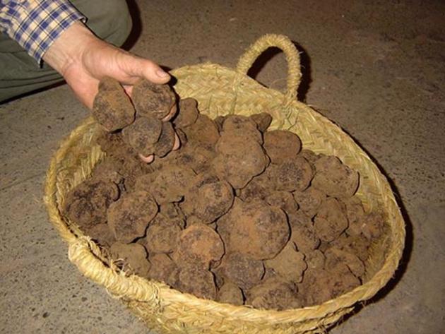 Una cesta de trufas negras