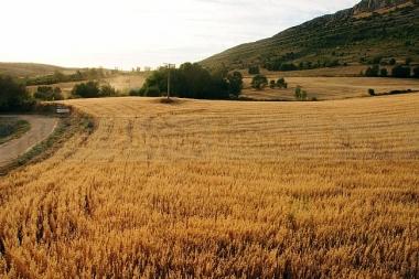Campo de cereal en la provincia