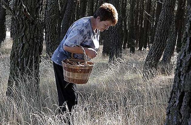 Una mujer recolectando setas