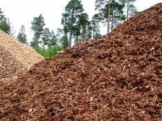 Biomasa forestal en el bosque