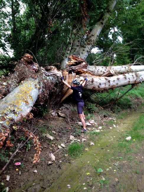 Otros árboles desplomados.
