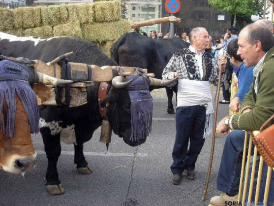 Feria Ganadera de Soria