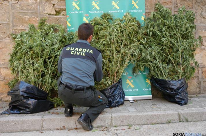 Marihuana en Villabuena