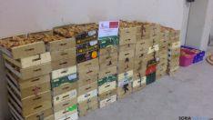Níscalos decomisados en Matalebreras