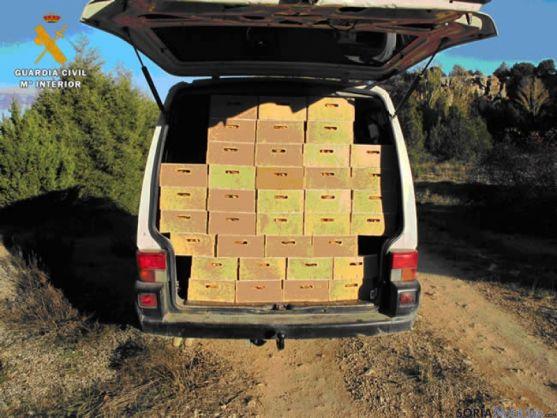 Níscalos decomisados en Calatañazor