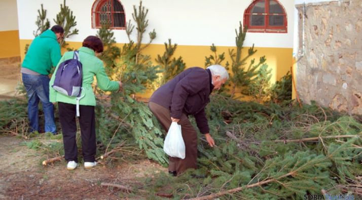 Vecinos sorianos eligiendo un pino para Navidad