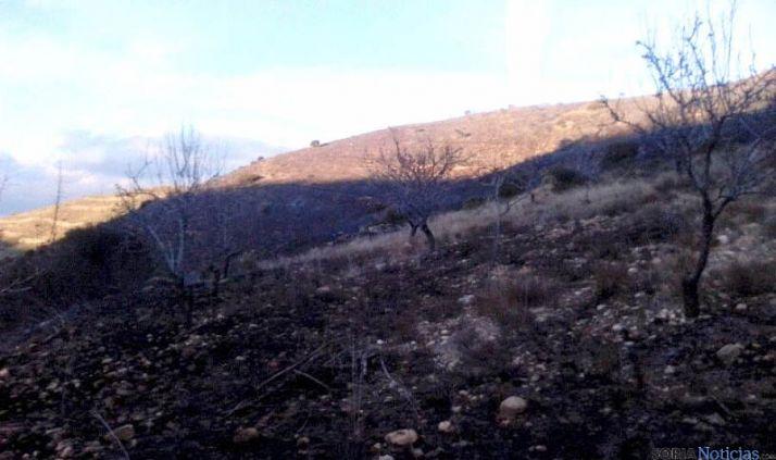 Una de las áreas afectadas por el fuego.