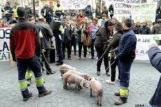 Manifestación en el sector porcino.