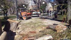 Labores de retirada del árbol.