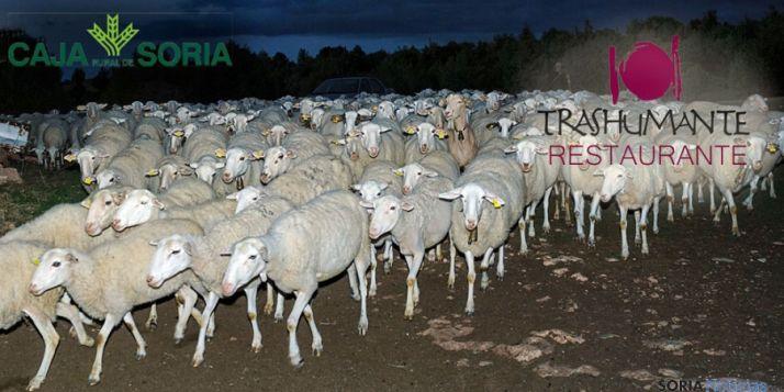 El pastoreo centra el nuevo concurso.