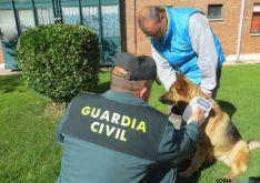 Campaña canina de la Guardia Civil