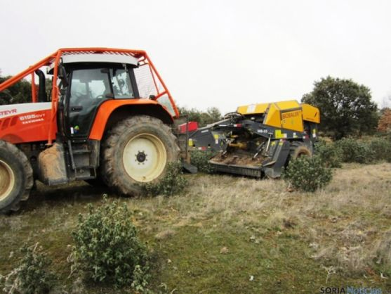 Recogiendo biomasa