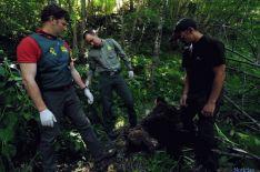 El oso muerto estaba junto a un arroyo