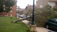 El árbol sobre la acera antes de retiraralo. / SN
