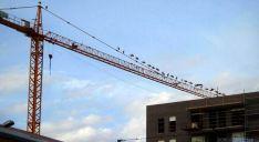 Las aves, encaramadas en una grúa de construcción. / SN