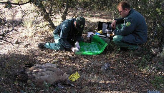 Agentes medioambientales investigan la muerte de un buitre.