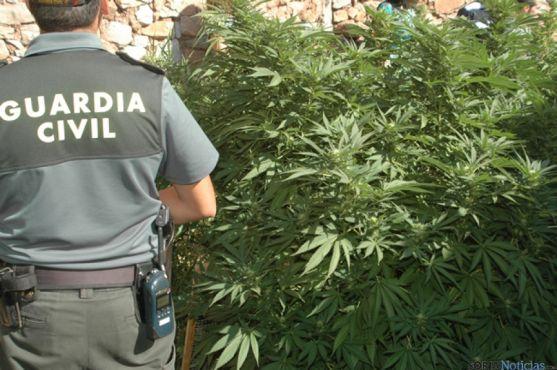 Marihuana en Aldealpozo