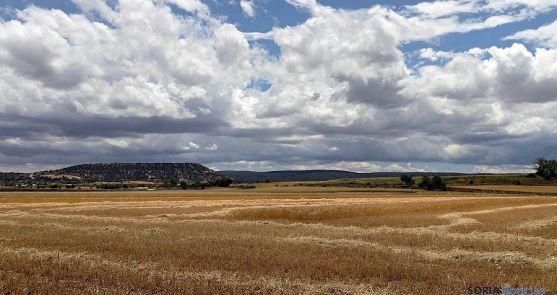 Campo de cereal cosechado en Recuerda. / FV