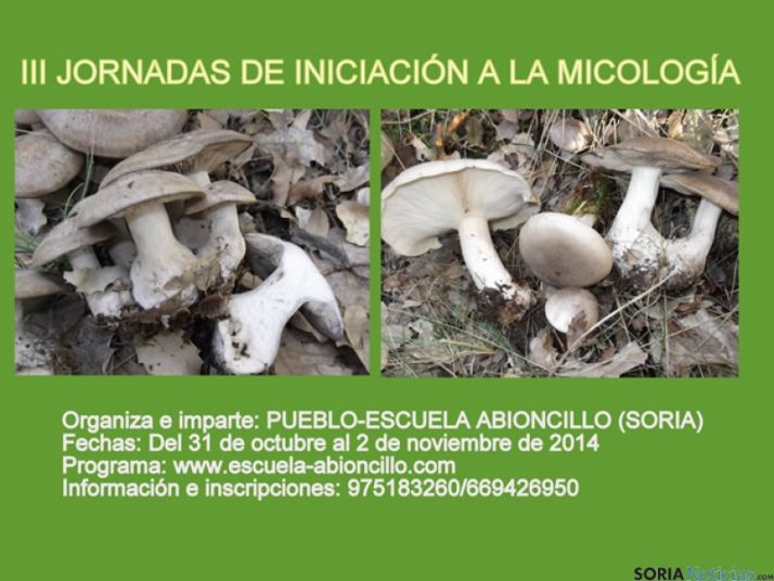 Cartel del curso micológico