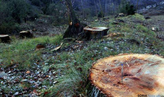 Imagen de la tala en el Abión. / ASDEN
