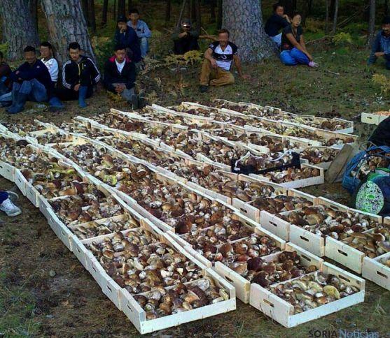 Recolectores ilegales con hongos decomisados. / SN