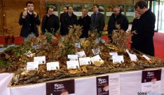 Mercasetas y tapas micológicas en Almazán