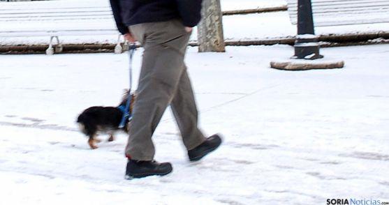 Un perro paseando con su dueño por la Dehesa este miércoles. / SN
