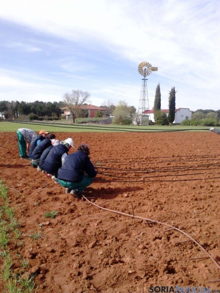 Labores de Huertos de Soria en Fuentepinilla.