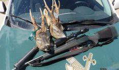 Las dos cabezas de corzos encontradas por la Guardia Civil. / Subdelg.