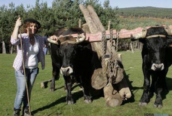 Vacas serranas