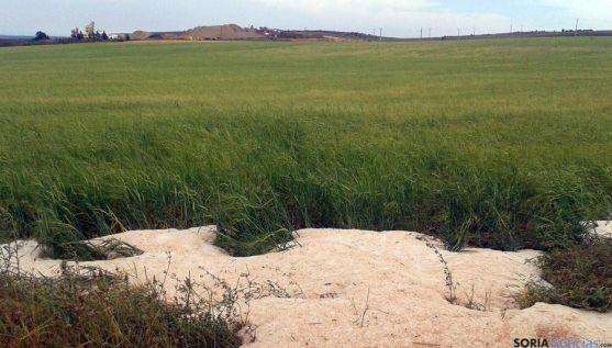 Granizo acumulado en una finca de cereal en la provincia.