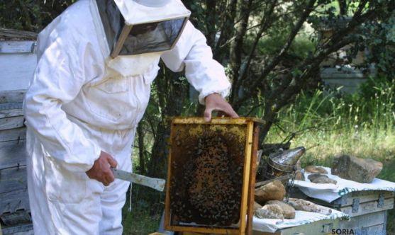 Miel en Soria