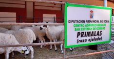 Imagen de la feria ganadera en el coso de San Benito. / SN