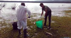 Labores de recogida de los animales muertos en el pantano. / Jta