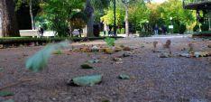 El viento arrastrando hojas en la Dehesa./SN