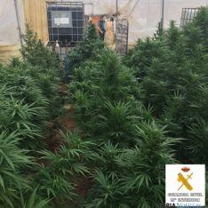Plantación de marihuana/Sub