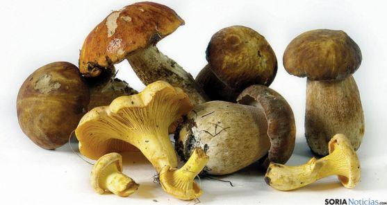 Diversas especies micológicas recogidas en la provincia. / pinaresnoticias.com