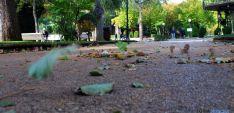 Hojas este otoño en la Dehesa./SN