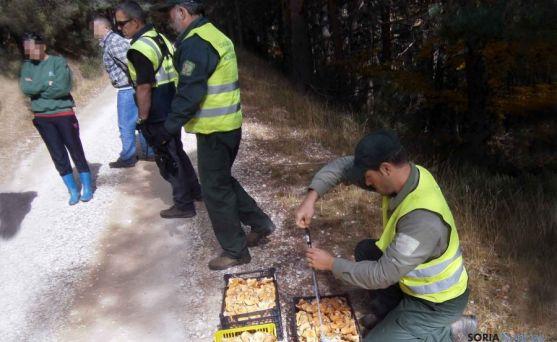 Uno de los decomisos realizados el pasado viernes en El Royo./Jta