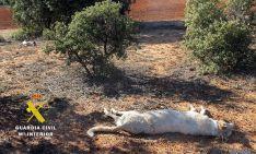 Los cadáveres abandonados de los perros.