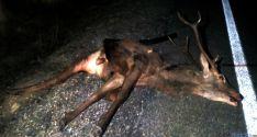 El animal tras el accidente. / SN