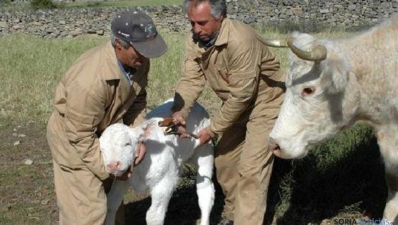 Los ganaderos tendrán más facil realizar trámites administrativos.