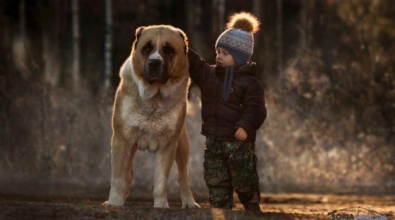Los niños creen que los animales no son juguetes.