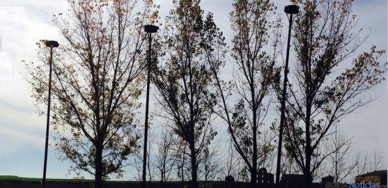 Nidos artificiales para estas zancudas instalados por Medio Ambiente. / Jta.