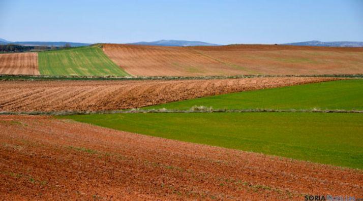 Campos de labor en la provincia de Soria. / SN