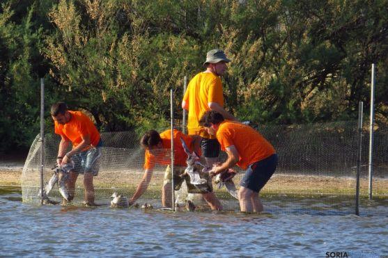 Más de cuatro mil voluntarios han participado desde 2011.