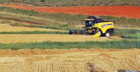 Una cosechadora en un campo de cereal soriano. / SN